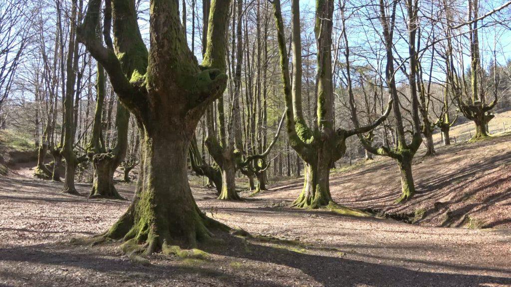 Qué ver y hacer en el País Vasco